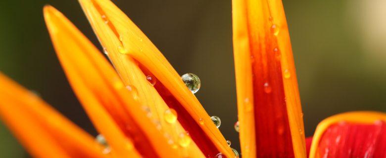 orange Pflanze